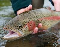 Helen GA Trout Fishing